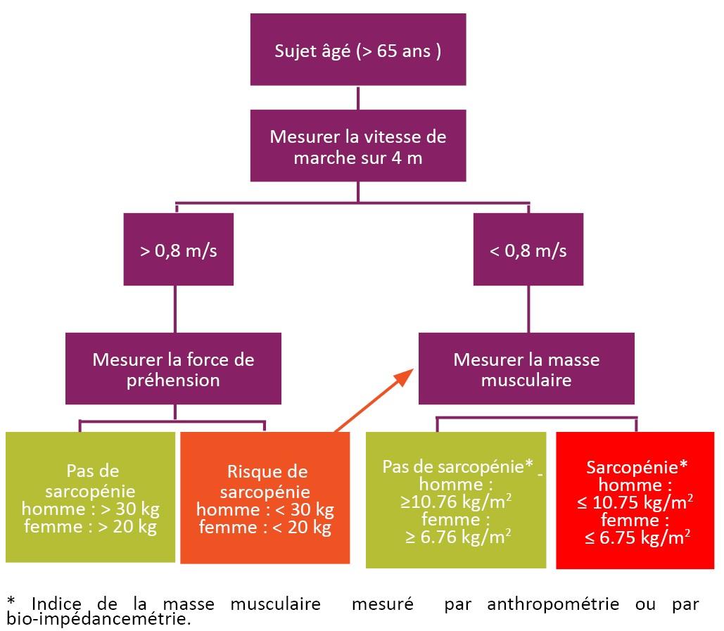 Adaptation de l'algorithme de dépistage de la sarcopénie chez les personnes âgées, suggéré par le groupe de travail EWGSOP
