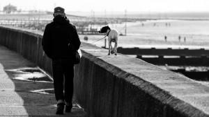 walk-1385880_640